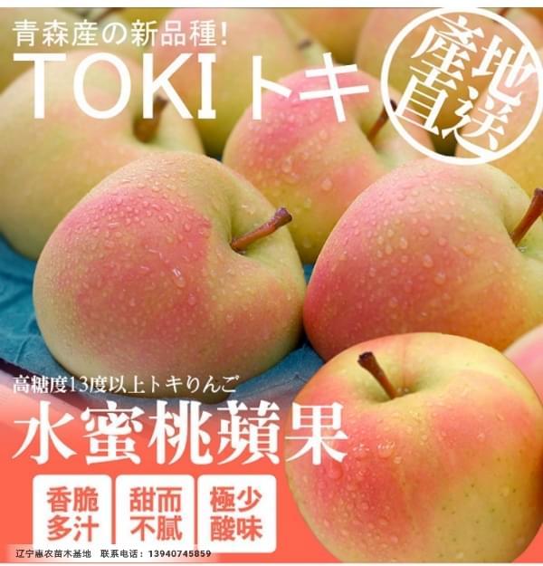 矮化寒富苹果苗、寒富苹果苗新品种