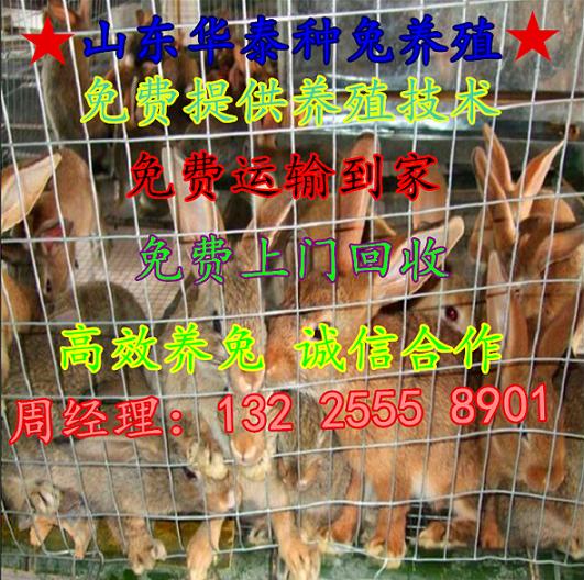 一只野兔有多少利润 北京有养殖野兔的吗