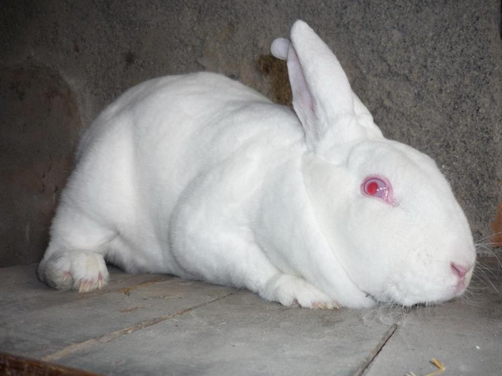 养殖獭兔赚钱吗