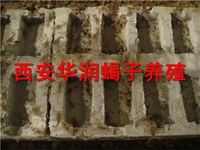 太原人工养殖蜈蚣蜈蚣养殖蝎子多少钱一斤