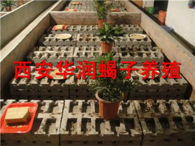 固原蝎子养殖加温设备蝎子养殖培训华南蝎子养殖技巧