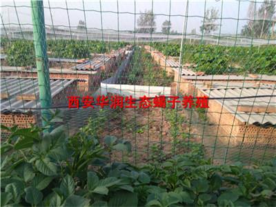 绵阳蝎子养殖厂家天然蝎子养殖场野外蝎子养殖场地建设