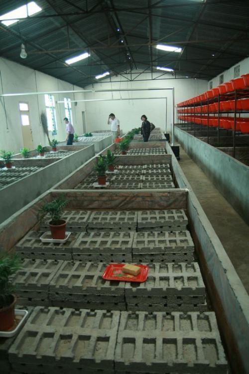 吐鲁番每日农经蝎子养殖甘肃蝎子养殖蝎子如何养殖