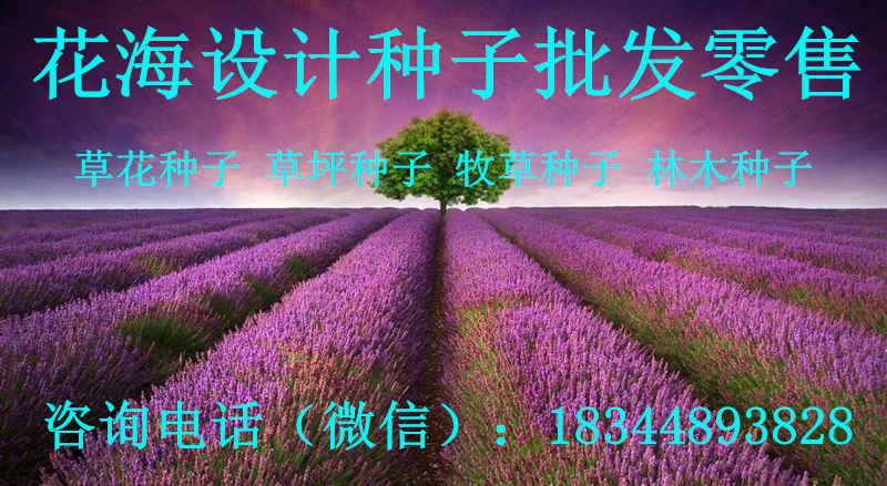 江苏省泰州市波斯菊种子哪里有卖