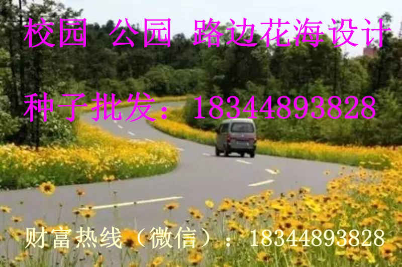江西省抚州市波斯菊种子哪里有卖