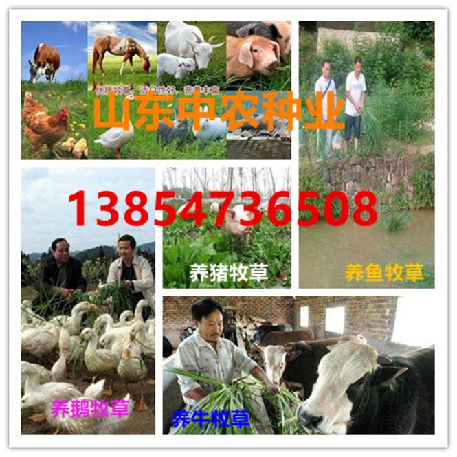 武威市畜牧局牧草种子多少钱