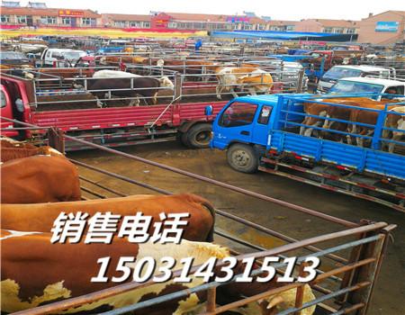 黑河市肉牛价格市场西门塔尔肉牛价格