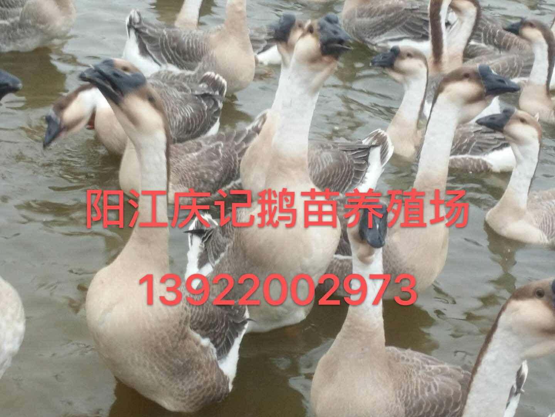 �江�c��Z苗�B殖有限公司