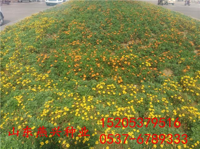 边坡草坪及其铺设方法多少钱一公斤农业