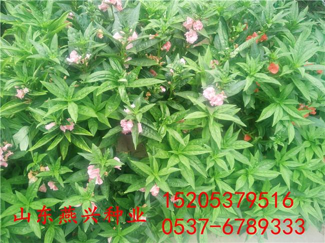 上海杨浦区高速护坡用的种子有哪些怎么撒草籽