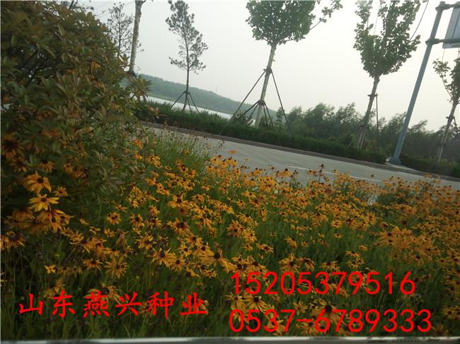 甘肃甘南州混播草籽配合比例怎么撒草籽
