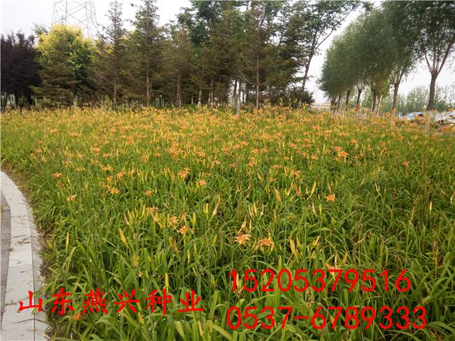 高速公路绿化护坡绿化草籽多少钱一斤农业