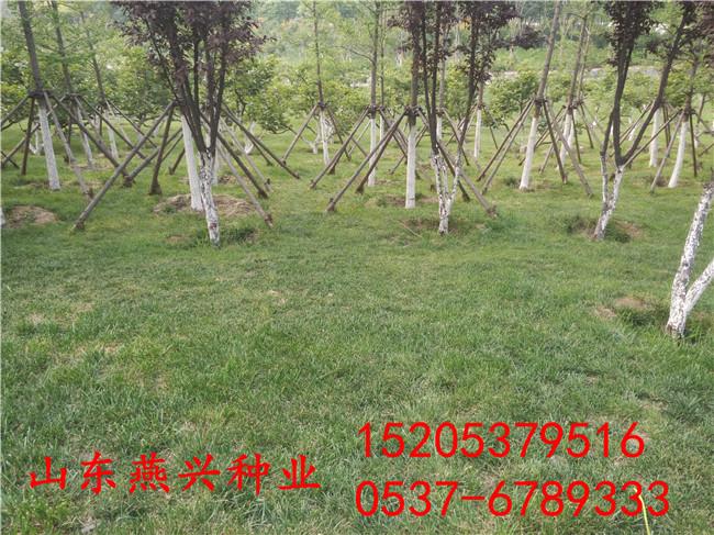 什么地方有卖护坡草种子现在护坡灌木种子