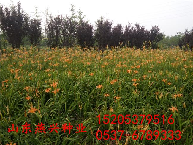 甘肃兰州河堤护坡草种子适合种什么草籽好