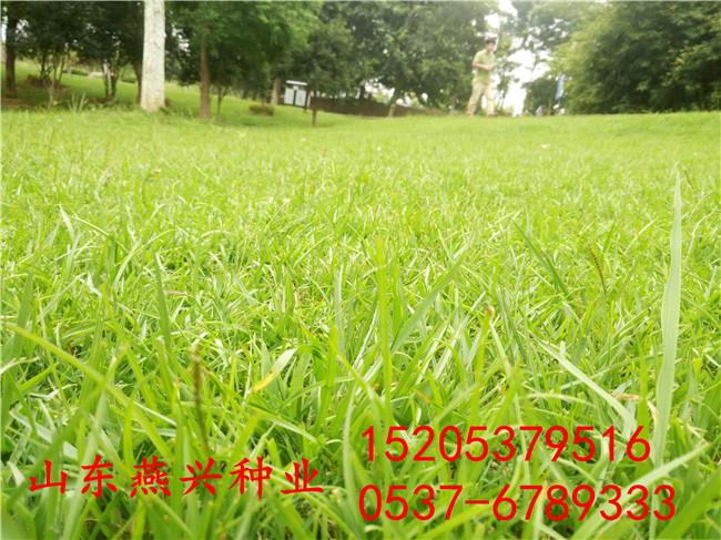 山东济宁生态护坡种什么草种植什么草种好