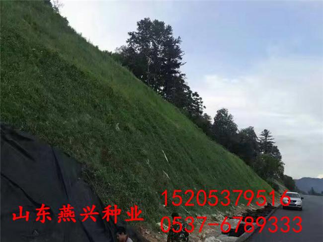 江西萍乡什么草种护坡比较好种植什么草种好