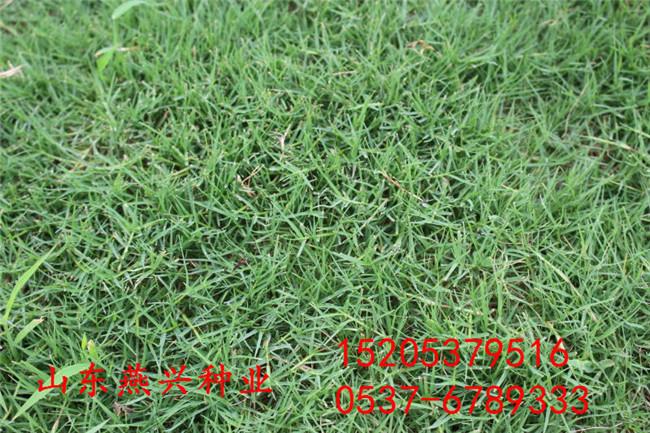 什么地方有卖护坡草万博体育线上边坡适合早熟禾草万博体育线上