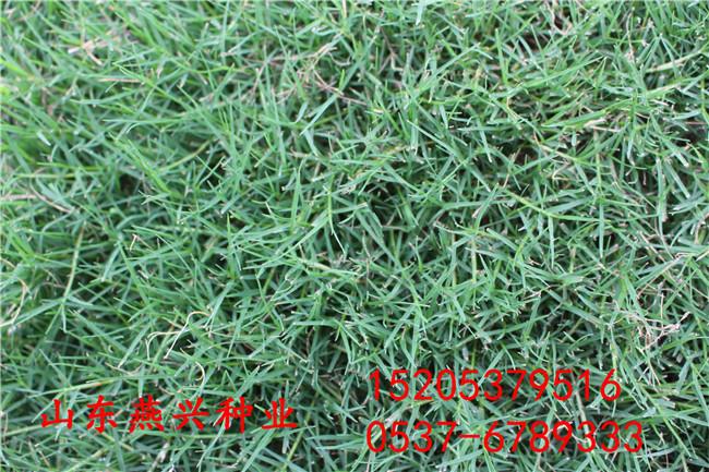 江苏泰州高速路护坡常绿种子有哪些品种有哪些