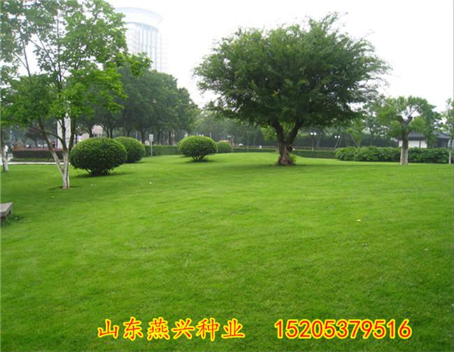 护坡绿化草籽农业