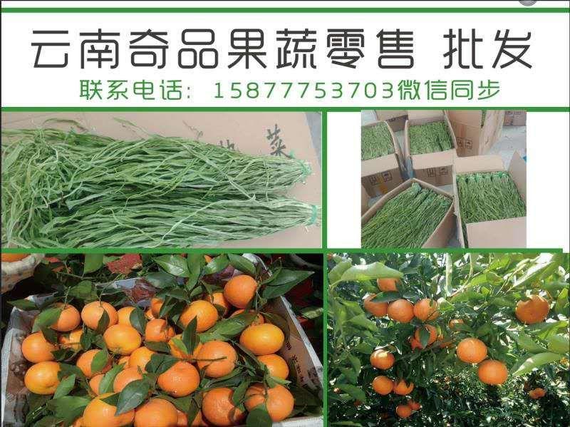 云南宾川柑桔大量供应