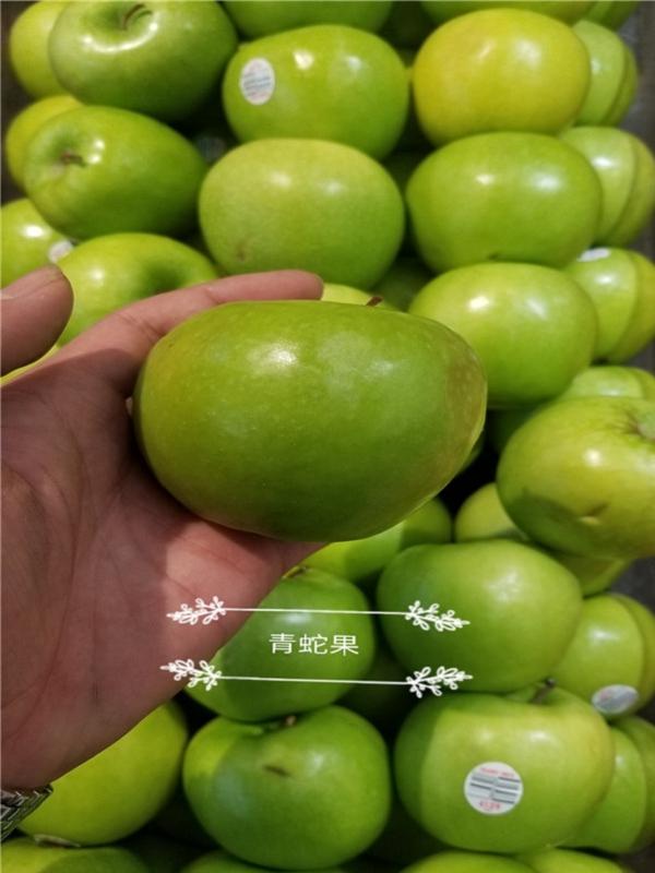 华硕苹果苗价钱那里便宜/1米高华硕苹果苗