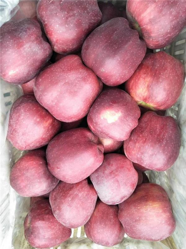 红宝石甜红肉苹果树苗哪里价格便宜/3公分红宝石甜红肉苹果树苗