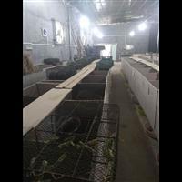 欢迎到崇左市实地培训竹鼠养殖