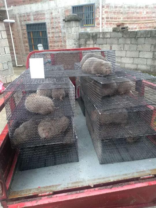于都县竹鼠养殖场、竹鼠肉供应