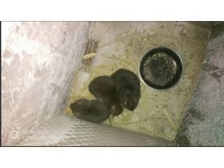 紫金县竹鼠养殖合作社、包技术回收