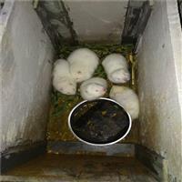 南澳县竹鼠养殖公司、竹鼠养殖合作社