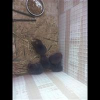 欢迎广安市光临竹鼠养殖基地