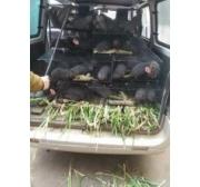 东源县竹鼠养殖公司、竹鼠养殖合作社