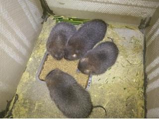 惠州市竹鼠每日报价