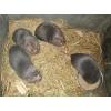 秀峰区竹鼠养殖公司、竹鼠养殖合作社