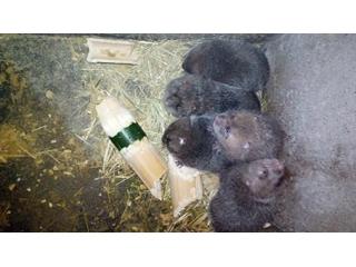 怀化市竹鼠养殖、竹鼠养殖合作社电话