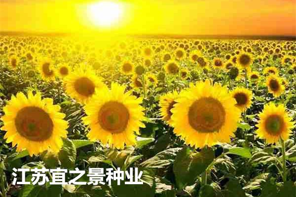 台州市田箐种子多少钱一斤