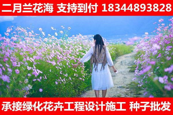 �v�R店市田箐�N子多少�X一斤