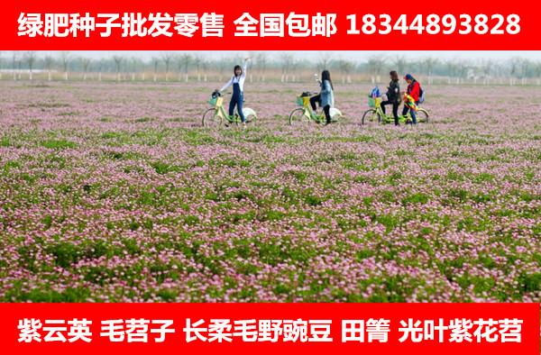 黔西南布依族苗族自治州田箐种子多少钱一斤