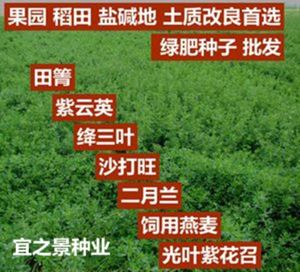 铜仁市紫云英种子多少钱一斤