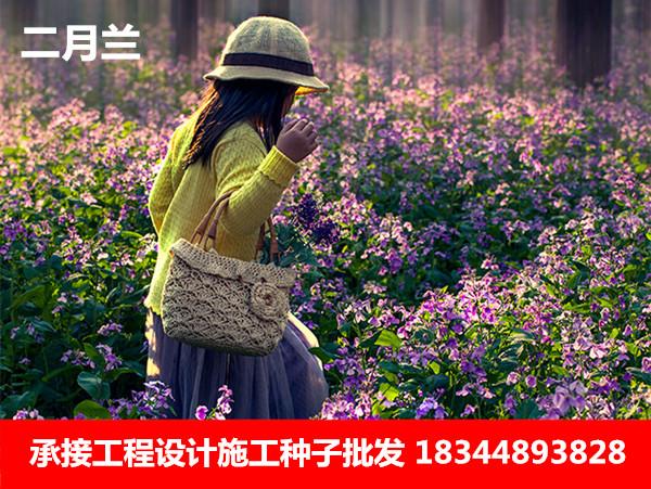贵阳市田箐种子现在价格