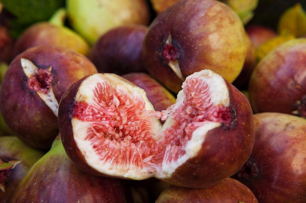 石家庄市供应砂糖无花果苗农科院种植基地果树