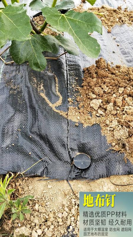 德州果园用防草地布90g报价、专业生产厂家