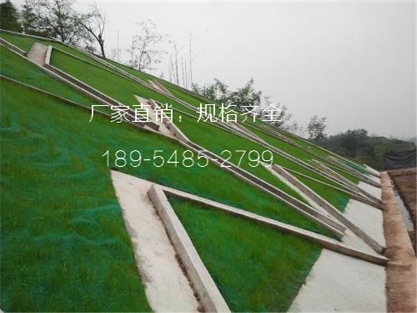 招商福建漳州市绿化三维网图片