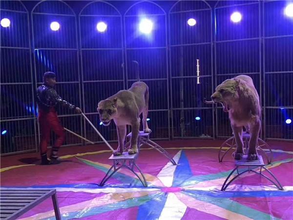 环球飞车演出马戏团表演-安庆市