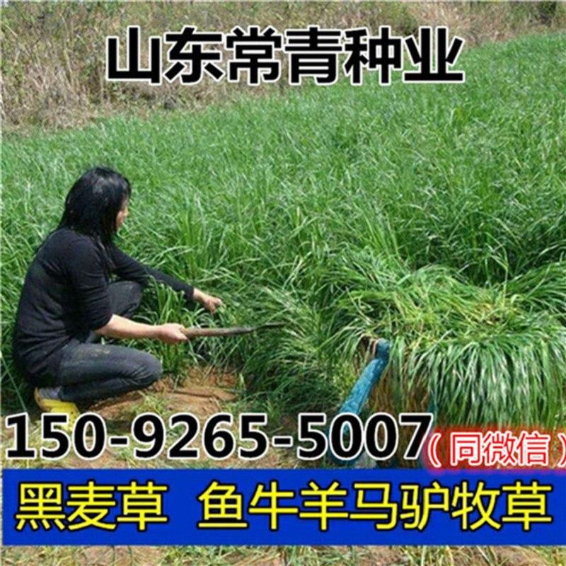 河源市耐涝牧草种子供给商