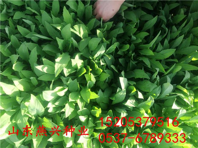 浙江杭州河堤护坡草种子适合种什么草籽好
