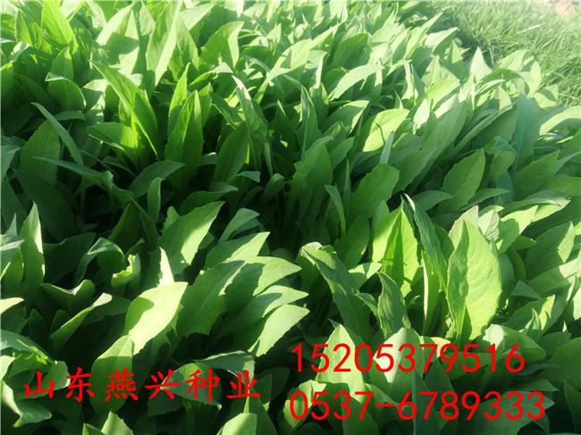 北京大兴区混播草籽配合比例怎么撒草籽