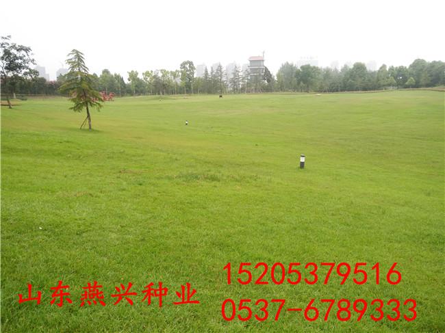 广东茂名堤坝选什么护坡草种品种有哪些