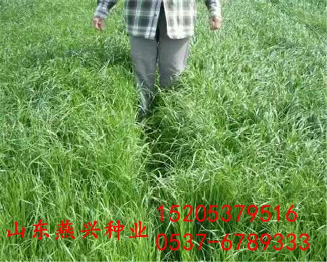 河南南阳高速护坡可以种哪些灌木种植什么草种好