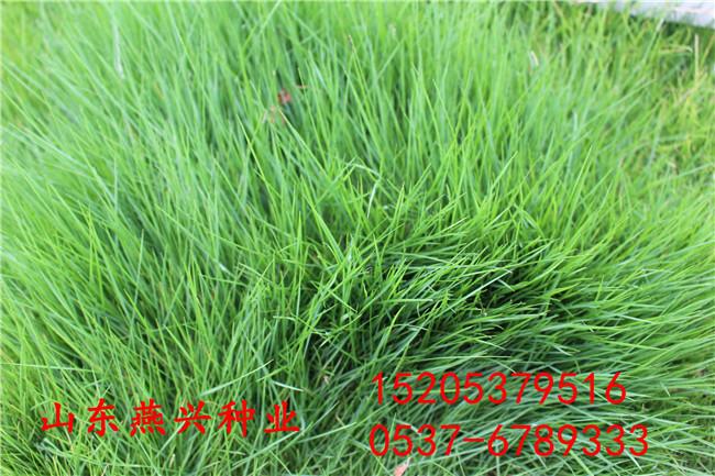 江苏南京护坡灌木种子生命力强的有哪些怎么种植